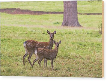 Wood Print featuring the photograph Double Take by Scott Carruthers