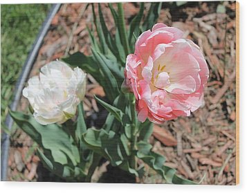 Double Tulip Wood Print