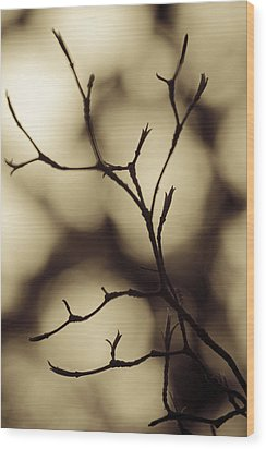 Wood Print featuring the photograph Double Vision by Tom Vaughan