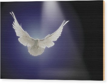 Dove Flying Through Beam Of Light Wood Print by Comstock Images