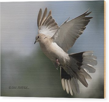 Wood Print featuring the photograph Dove Takeoff by Don Durfee