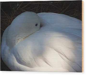 Down For A Nap Wood Print by Karen Wiles