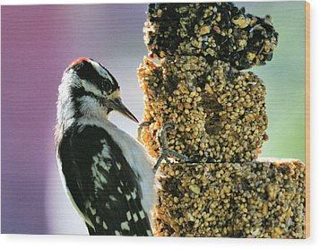 Downy Woodpecker Wood Print by Aliceann Carlton