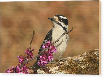 Downy Woodpecker In Spring Wood Print by Sheila Brown