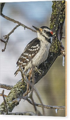 Downy Woodpecker Wood Print by Irwin Seidman