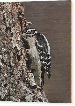 Wood Print featuring the photograph Downy Woodpecker's Secret Stash by Lara Ellis