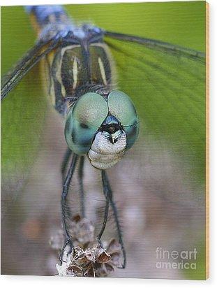 Bug-eyed Wood Print by Debbie Stahre