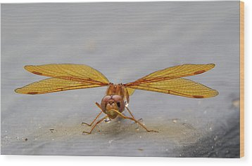 Dragon Fly Hanging Around Wood Print