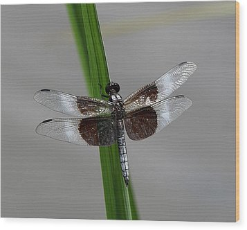 Wood Print featuring the photograph Dragon Fly by Jerry Battle
