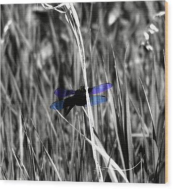 Dragon Fly Wood Print by Jimmy Ostgard