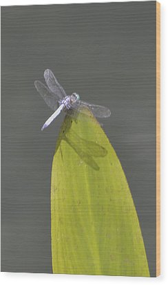 Dragon Fly Wood Print by Linda Geiger