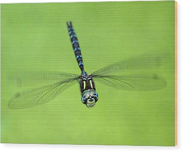 Dragonfly #1 Wood Print by Ben Upham III