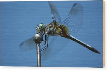 Dragonfly 1 Wood Print by Maria  Wall