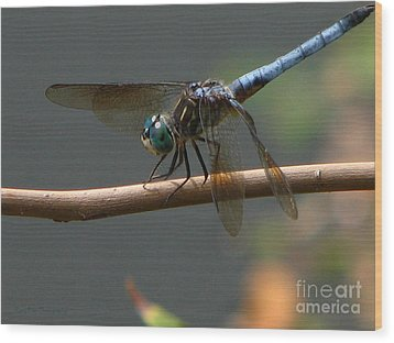 Wood Print featuring the photograph Dragonfly 2010 by Roxy Riou