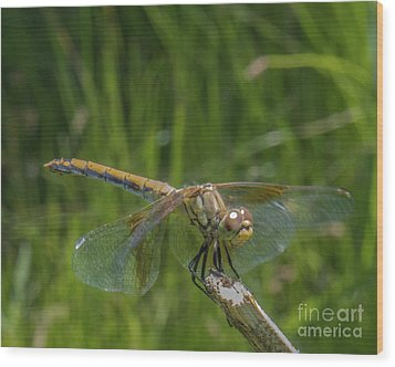 Dragonfly 7 Wood Print