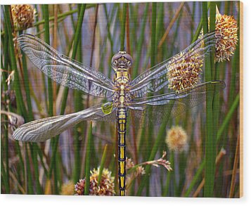 Dragonfly Wood Print by Alison Lee  Cousland
