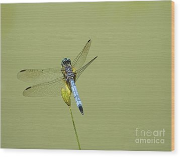 Dragonfly Wood Print by Andrew Kazmierski