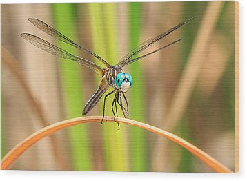 Dragonfly Wood Print by Everet Regal