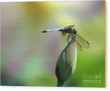 Dragonfly In Wonderland Wood Print by Sabrina L Ryan