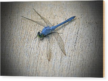 Dragonfly Wood Print by Jean Haynes