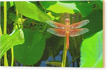 Dragonfly Wood Print by Mark Barclay