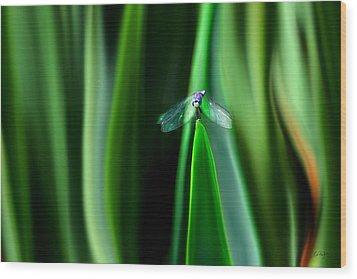 Dragonfly Meditation Wood Print