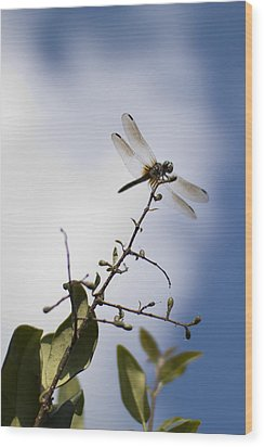Dragonfly On A Limb Wood Print by Dustin K Ryan