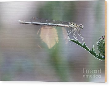 Wood Print featuring the photograph Dragonfly On Leaf by Michal Boubin