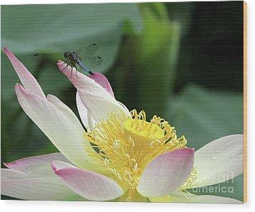 Dragonfly On Lotus Wood Print by Sabrina L Ryan