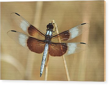Wood Print featuring the photograph Dragonfly On Reed by Sheila Brown