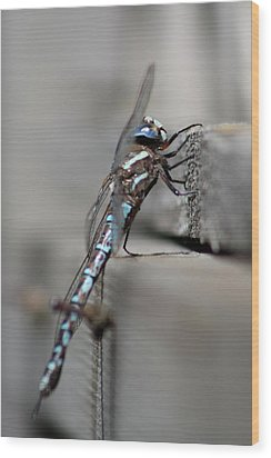Wood Print featuring the photograph Dragonfly Pause by Cathie Douglas