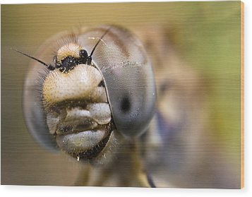 Dragonfly Portrait Wood Print by Andre Goncalves