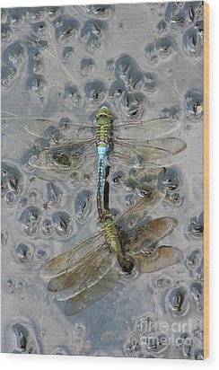 Dragonfly Reflections Wood Print