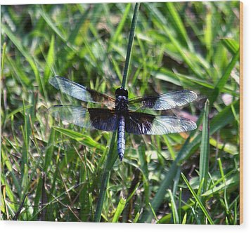 Dragonfly Resting Wood Print by D Winston