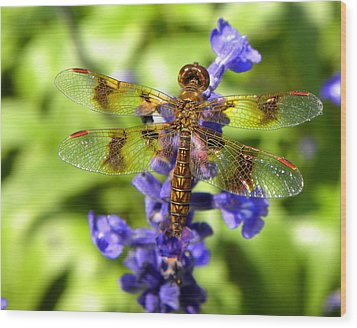 Wood Print featuring the photograph Dragonfly by Sandi OReilly