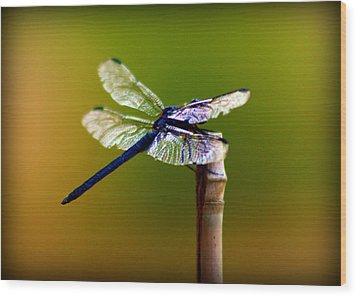 Dragonfly Wood Print by Susie Weaver