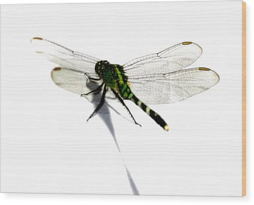Dragonfly Wood Print by Tbone Oliver