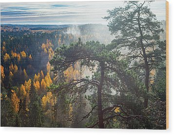 Dramatic Autumn Forest With Trees On Foreground Wood Print