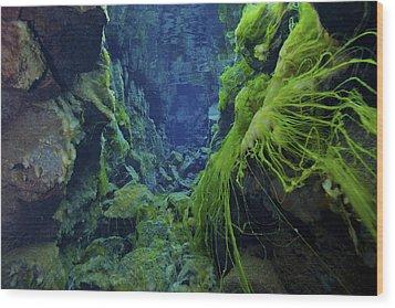 Dramatic Fluorescent Green Algae Wood Print by Mathieu Meur
