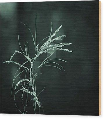 Dream Catcher Wood Print by Mary Amerman