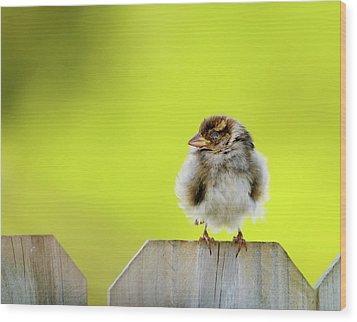 Dream Sparrow Wood Print by Betty LaRue