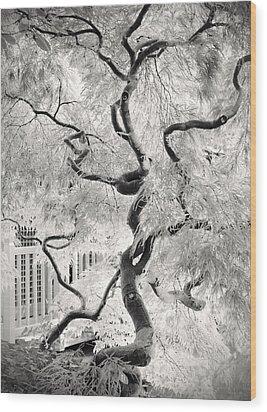 Dream Tree Wood Print by Dorit Fuhg