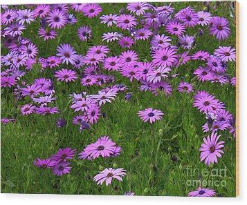 Dreaming Of Purple Daisies  Wood Print