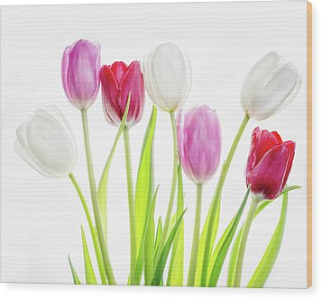 Wood Print featuring the photograph Dreaming Of Spring by Rebecca Cozart