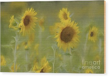 Wood Print featuring the photograph Dreaming Of Sunflowers by Benanne Stiens