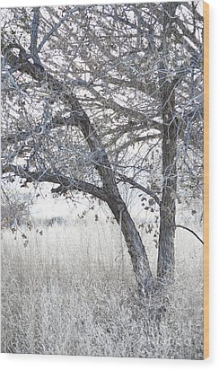 Wood Print featuring the photograph Dreamy Bosque Tree by Andrea Hazel Ihlefeld