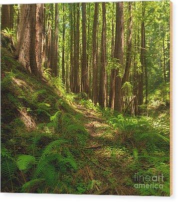 Dreamy California Redwoods Wood Print by Matt Tilghman