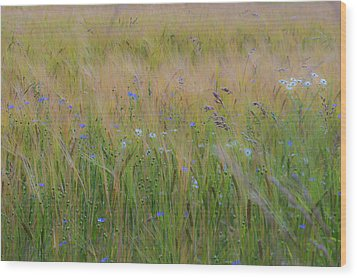 Dreamy Meadow Wood Print
