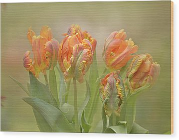 Wood Print featuring the photograph Dreamy Parrot Tulips by Ann Bridges