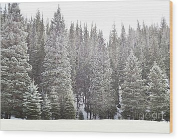 Wood Print featuring the photograph Dreamy Pine Snow Forest Landscape by Andrea Hazel Ihlefeld